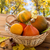 close up of pumpkins in basket on wooden table stock photo © dolgachov