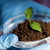 close up of hands with plant and soil in lab stock photo © dolgachov