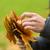 mulher · mãos · outono · bordo · folhas - foto stock © dolgachov