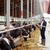 man · koeien · hooi · zuivelfabriek · boerderij - stockfoto © dolgachov