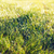 close up of green grass with dew stock photo © dolgachov