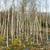 болото · трава · отражение · Швеция · солнечный · свет - Сток-фото © donatas1205