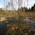 болото · восточных · Европа · весны · время · воды - Сток-фото © donatas1205