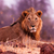 oroszlán · vad · pihen · fű · természet · Afrika - stock fotó © Donvanstaden