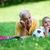 grootvader · zoon · kleinzoon · park · voetbal · familie - stockfoto © dotshock