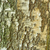 huş · ağacı · doku · ağaç · ahşap · arka · plan · model - stok fotoğraf © drizzd