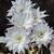 belo · luz · flores · brancas · cacto · abstrato · natureza - foto stock © Dserra1