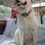 labrador · cão · carro · cara · natureza · cabelo - foto stock © Dserra1