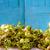 radijs · verkoop · vers · markt · tuin - stockfoto © dutourdumonde