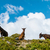 three donkeys stock photo © dutourdumonde