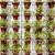 ao · ar · livre · flor · pequeno · jardim · terraço - foto stock © dutourdumonde