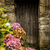 antieke · groene · houten · deur · deurbel · hout - stockfoto © dutourdumonde