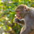 обезьяны · каменные · Blue · Sky · Таиланд · ребенка · глазах - Сток-фото © dutourdumonde