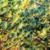 örökzöld · faág · háttér · zöld · absztrakt · természetes - stock fotó © dutourdumonde