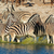 plains zebras in water stock photo © ecopic