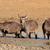 sár · park · Dél-Afrika · víz · állat · afrikai - stock fotó © ecopic