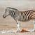 zebra · Namibya · park · Afrika · yüz - stok fotoğraf © ecopic
