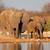büyük · Afrika · filler · park · portre · Namibya - stok fotoğraf © ecopic