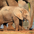 baby african elephant stock photo © ecopic