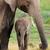 afrika · fil · inek · genç · park · Kenya · doğa - stok fotoğraf © ecopic