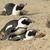 アフリカ · 3 ·  · 南アフリカ · 自然 · 海 · 鳥 - ストックフォト © ecopic