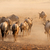 синий · пыли · Восход · пустыне · ЮАР · природы - Сток-фото © ecopic