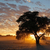 african sunset with silhouetted tree stock photo © ecopic