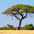 thorn tree landscape   etosha stock photo © ecopic