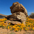 flores · silvestres · África · do · Sul · norte · flor · beleza - foto stock © ecopic