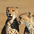 éber · gepárd · sivatag · Dél-Afrika · macska · portré - stock fotó © ecopic