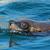 мех · печать · крест · Намибия · морем · океана - Сток-фото © ecopic