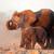 afrika · fil · kapalı · toz · büyük · park · Namibya - stok fotoğraf © ecopic