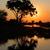 África · puesta · de · sol · árbol · desierto · Sudáfrica · naturaleza - foto stock © ecopic