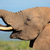 African elephant portrait stock photo © EcoPic