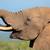 elefant · delta · Botswana · natură · verde · animal - imagine de stoc © ecopic