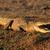 krokodil · nehir · Botsvana · çim · ağız · Afrika - stok fotoğraf © ecopic