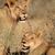 buit · achtergrond · savanne · Kenia · afrika - stockfoto © ecopic