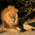 большой · мужчины · африканских · лев · портрет · ЮАР - Сток-фото © ecopic