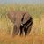büyük · fil · boğa · yeme · doğa · rezerv - stok fotoğraf © ecopic