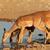 impala antelopes at waterhole stock photo © ecopic