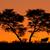 afrikaanse · boom · landschap · mooie · park · Zimbabwe - stockfoto © ecopic