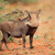 ЮАР · рот · Африка · зубов · Safari · Открытый - Сток-фото © ecopic