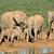 afrikaanse · olifant · familie · afrikaanse · olifanten · olifant · park - stockfoto © ecopic