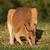 трава · живая · природа · животные · Австралия · пейзаж - Сток-фото © ecopic