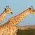 mavi · ayakta · Güney · Afrika · su · çim - stok fotoğraf © ecopic
