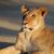ışık · çöl · Güney · Afrika - stok fotoğraf © ecopic