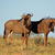 Blauw · woestijn · artistiek · natuur · afrika · snelheid - stockfoto © ecopic