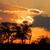 アフリカ · 日没 · ツリー · ほこり · 砂漠 · 南アフリカ - ストックフォト © ecopic