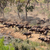 воды · Safari · парка · ЮАР · слон · реке - Сток-фото © ecopic