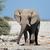 afrika · fil · park · portre · Namibya · yaban · hayatı · fotoğrafçılık - stok fotoğraf © ecopic